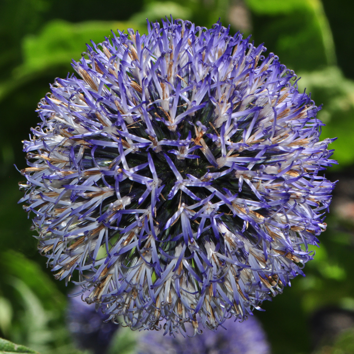 Visions from the Garden - Flower 2