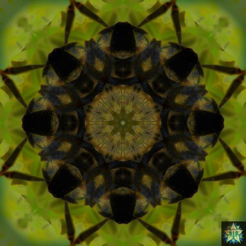 Yellow Bee Mandala 2